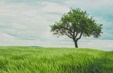 """Hva skjer med """"grønne"""" investeringer?"""
